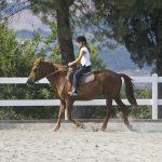 136-paardrijden